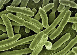 Removal of pathogen: vermicomposting vs composting